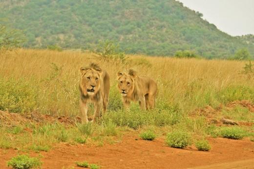 Сафари в Танзания с почивка в Занзибар